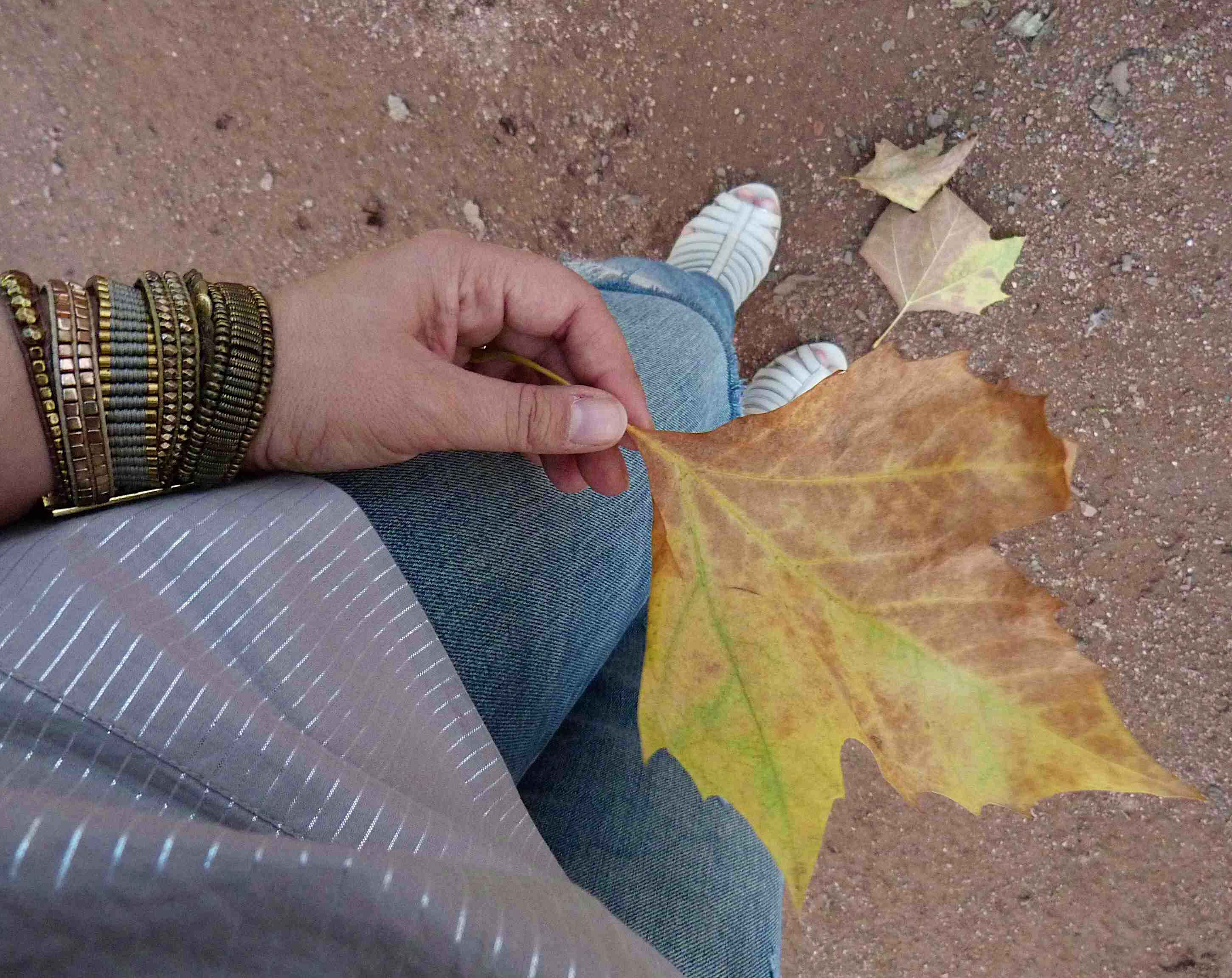 Indian Summer - autumn leaf