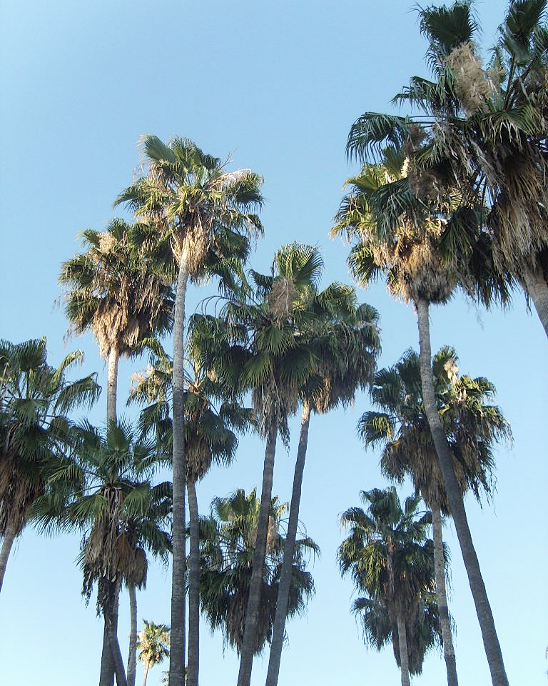 Palmtrees - Los Angeles