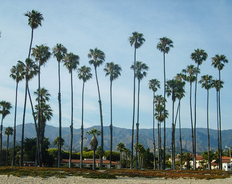 Palmtrees - Santa Barbara