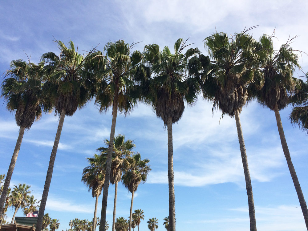 Palm-Trees-Los-Angeles-3